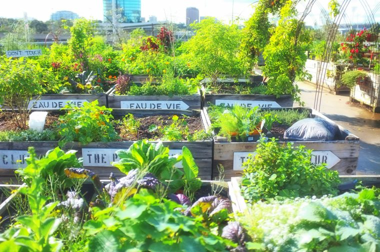 Urban food growing is part of the city future:  like this Pop Up Veggie Patch in Melbourne.  Photo: Yellen